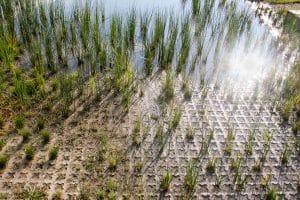 Detention pond with plants growing through Grasscrete voids.