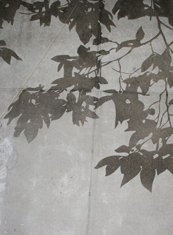 Sandblasted Concrete look like tree shadows on form finished wall.