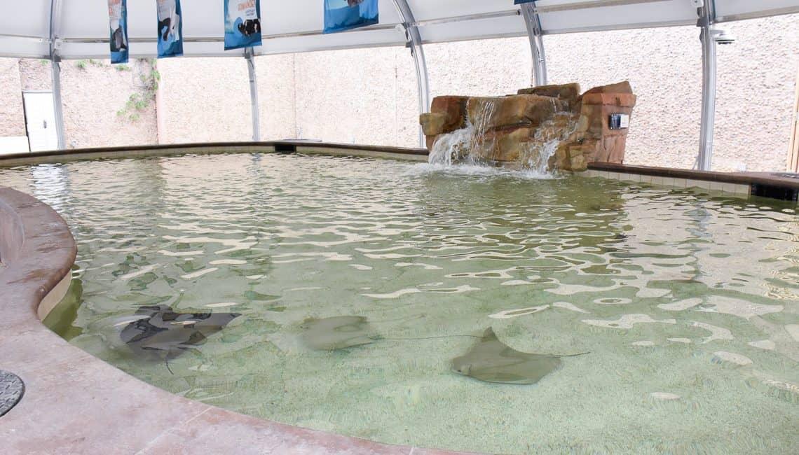 Denver Zoo Stingray 5087 web